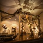 museo_storia_naturale_-2