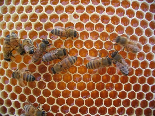 Fissato per sabato l'incontro tra Regione e Apicoltori, emergenza produzione miele