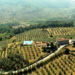 quarrata_montalbano_paesaggio_olivete_2