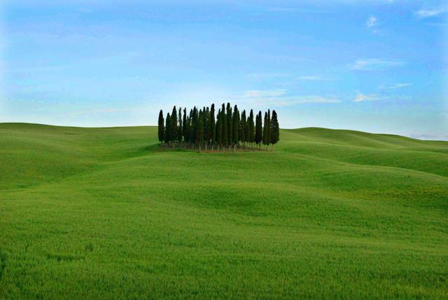 Αποτέλεσμα εικόνας για I cipressi di San Quirico d'Orcia