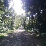 viareggio_pineta03