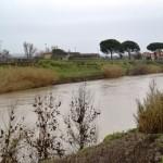 L'Arno a Tinaia (Empoli), ore 9 di lunedì 10 febbraio 2014 (foto gonews.it)