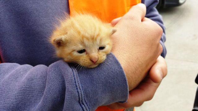Abbandona una gattina di tre settimane: testimone lo vede e lo fa denunciare