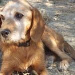 cani canile cane generica
