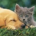 gatto_cane