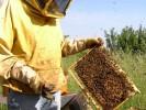 apicoltura01