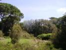 I resti della 'Quercia del Cinto' rimossi senza il nulla osta dell'Ente Parco
