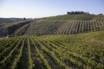 montespertoli_vigneti panorama