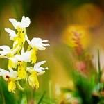 Una specie di orchidea