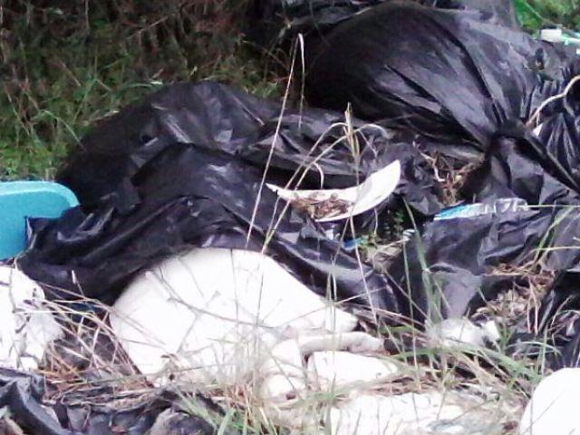 La lega nord accusa forte degrado nella zona del cimitero del pino - Meteo bagno a ripoli ...