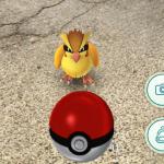 Pokemon_Maiano (1)