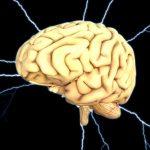 cervello_generica