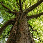 albero_generica