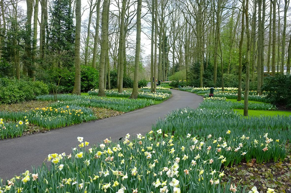 Legge Bonus Verde 2018 bonus verde 2018, incentivi fiscali per giardini e terrazzi