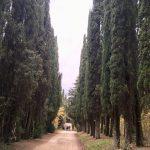 firenze_bologna_via_degli_dei_2017_11_23