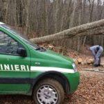 bosco carabinieri forestali forestale
