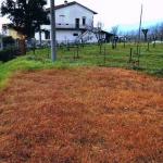 orentano_castelfranco_campi_glifosato_2018_02_07__1