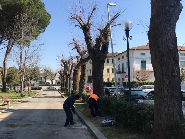 Piazza Garibaldi e viale Vigesimo, 11 alberi da abbattere e asfalto da rinnovare