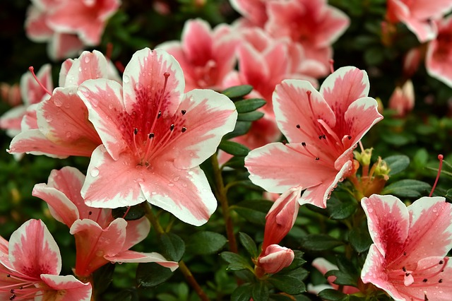 fiori generica