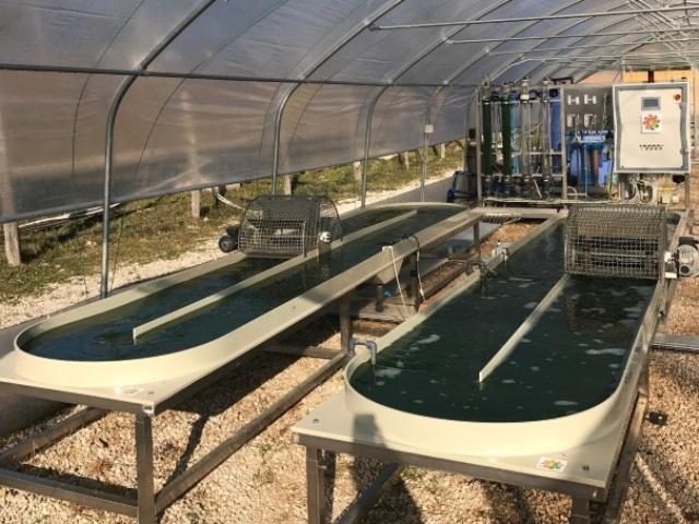 impianto pilota alga spirulina 3