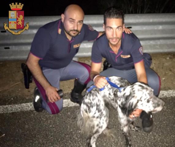 PISA - Cane salvato dalla pattuglia (19-7-18) - FOTO 1