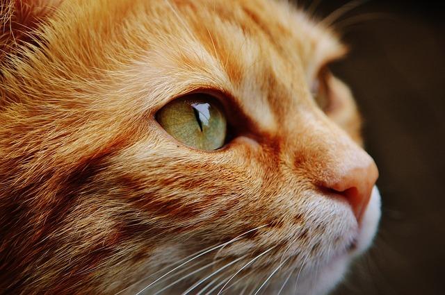 gatto generica