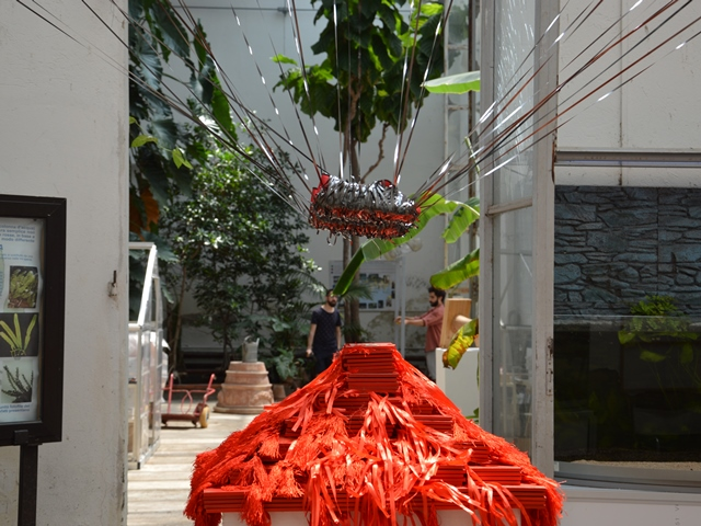 Orto botanico di firenze la serretta dedicata alle bromeliacee