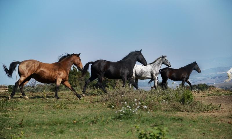 """Altri due cavalli muoiono a Volterra, Ihp: """"Istituzioni ci supportino nella ricerca delle cause"""""""