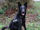 OKAR cane antidroga questura firenze polizia