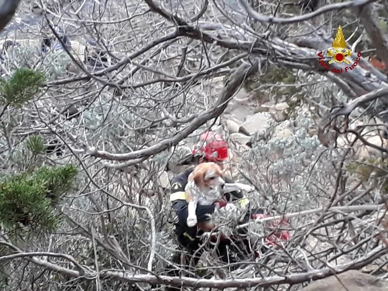 Cane non riesce a tornare dalla scogliera, lo aiutano i vigili del fuoco