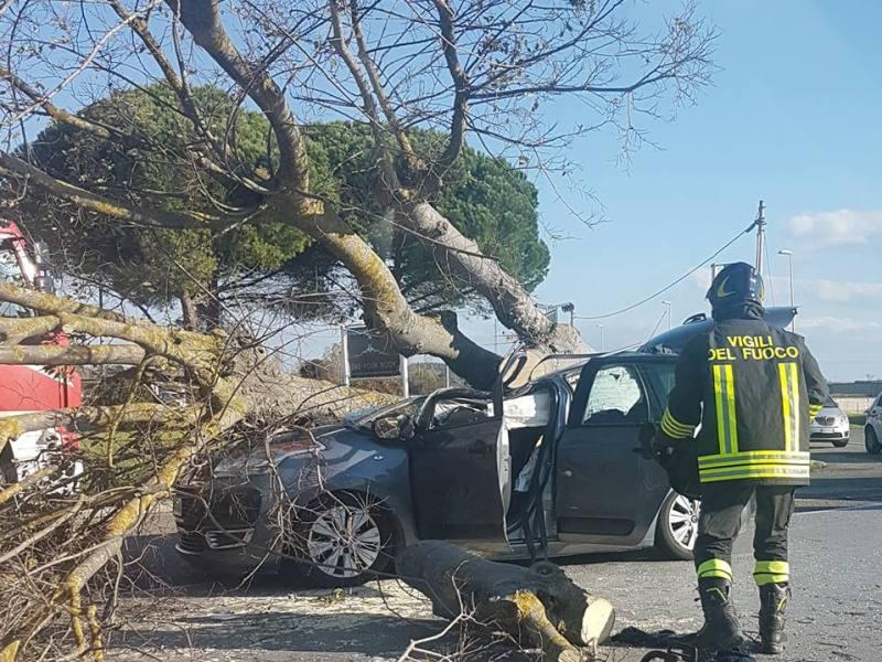 Albero schiaccia auto a Pontedera: ferito conducente