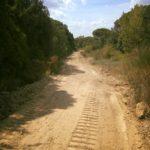 pulizia_via_treggiaia_capraia_limite_1