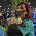 gatto esposizione internazionale felina 1