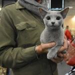 gatto esposizione internazionale felicna