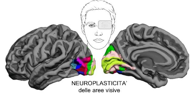 thumbnail_plasticità_cervello