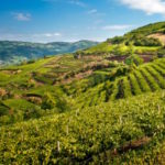 agricoltura_turismo_generica_toscana_chianti_2019_01_09