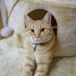 gatto_ottone_scomparso_santa_maria_monte_1