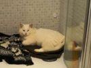 gatto_scomparso_calenzano_