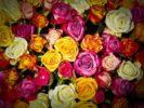 rose_mazzo_fiori_