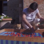 san gimignano gatti 1