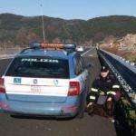 PISTOIA - Cane fugge da casa e finisce sull'A-11 - la Polstrada lo riaffida al proprietario. FOTO