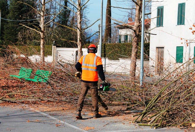 Potatura alberi ditte a titolo gratuito potranno tenere for Ditte traslochi livorno