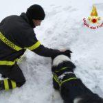 neve_cani_abetone_vigili_fuoco_3