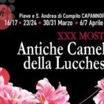 XXX Mostra Antiche Camelie della Lucchesia,
