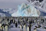 pinguini-Olmastroni