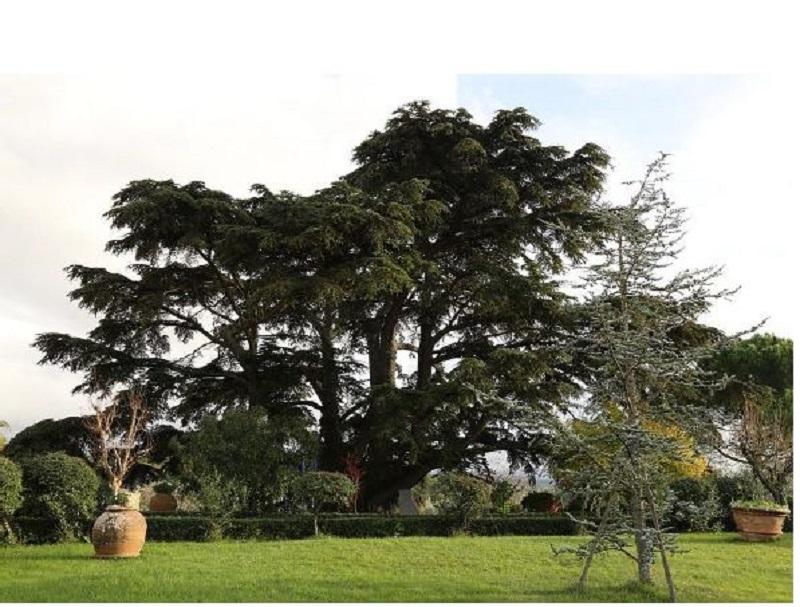 thumbnail_albero monumentale