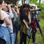 Monitoraggio aironi e ibis (foto Alessio Bartolini)