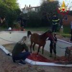 cavallo_piscina_vigili_fuoco_fucecchio_2019_05_01__1