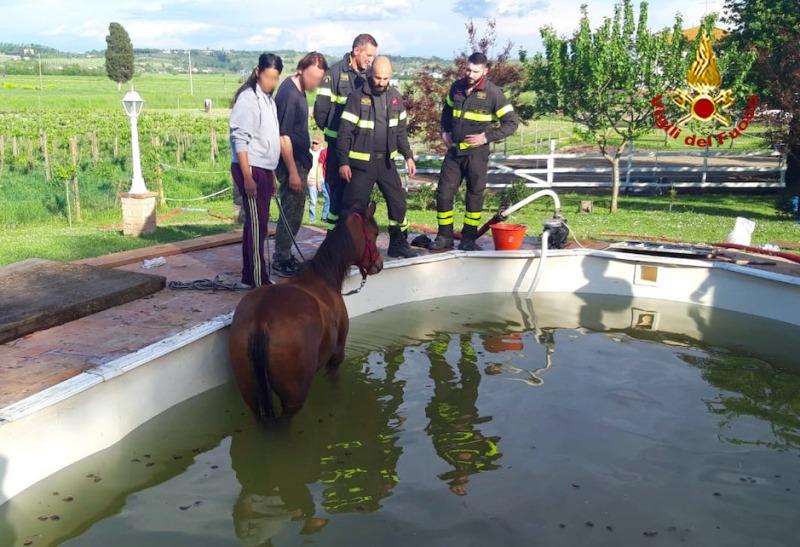 cavallo_piscina_vigili_fuoco_fucecchio_2019_05_01__2