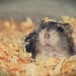 hamster-3878853_1280